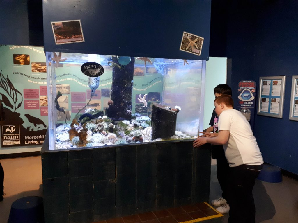 The image show two children peering into the starfish exhibit at Anglesey sea zoo