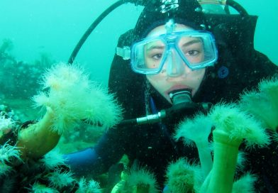 Scuba Diving in Anglesey