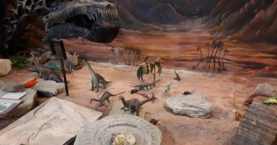 image shows a dinosaur exhibit at the stone science museum