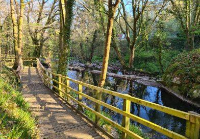The Dingle Nature Reserve
